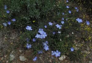 2015-05-30 Sierra Nevada Hoya de Pedraza (9)