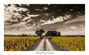 16 B039 David Paez García