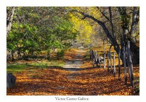 16 B089 Victor Castro Galvez